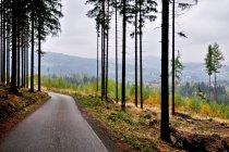 Trasa rowerowa w Beskidzie Śląskim