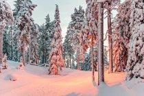 Trasy narciarskie w świetle latarni