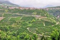 Uprawy winorośli w Val di Non