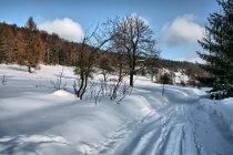 W dolinie dawnego Czertyżnego