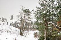 W lasach leśnictwa Drozdowo
