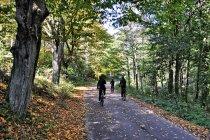 W lasach Leśnictwa Kochanki