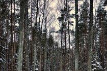W lesie koło Zgorzałego