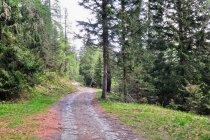 W lesie w Dolomitach
