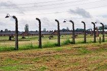 W nazistowskim obozie koncentracyjnym w Brzezince
