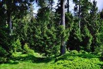 W Parku Narodowym Harzu