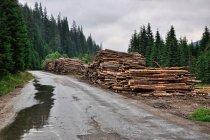 Widoczna intensywna gospodarka leśna w Karpatach