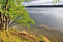 Widok na jezioro z kempingu Półwysep Lipa