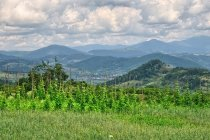 Widok na Karpaty Marmaroskie