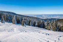Widok spod schroniska pod Śnieżnikiem
