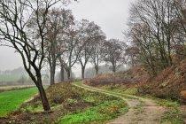 Wiejska droga koło Jarcewa