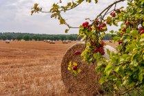 Wiejskie klimaty w Brandenburgii