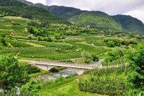 Winnice i sady w Val di Sole