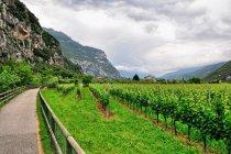Winnice koło drogi rowerowej za Arco