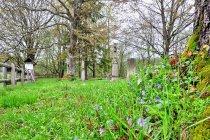 Wiosna na cmentarzu we wsi Nieznajowa