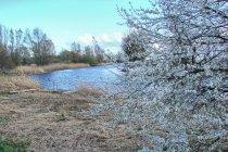 Wiosna nad Motławą