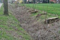 Wycięte przydrożne drzewa w Długim Polu