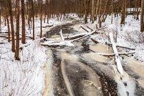 Zamarznięty potok Lutownia
