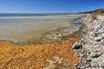 Zatoka Pucka w Juracie