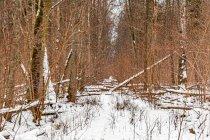 Zawalony drzewami szlak turystyczny