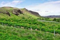 Zielona Islandia