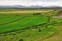 Zielony krajobraz Islandii
