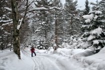 Zima w Beskidzie Niskim