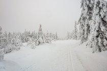 Zimowa sceneria Gór Orlickich