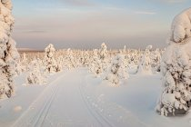 Zimowe horyzonty w Finlandii