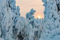Zimowe Słońce w Finlandii