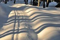 Zimowe wzory