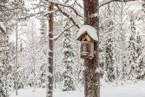 Zimowy fiński las