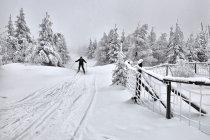 Zjazd na biegówkach na Polanę Izerską