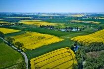 Żółto-zielone Kociewie