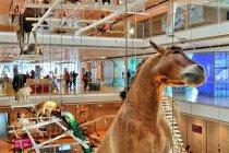 Zwierzęta z MUSE w Trydencie