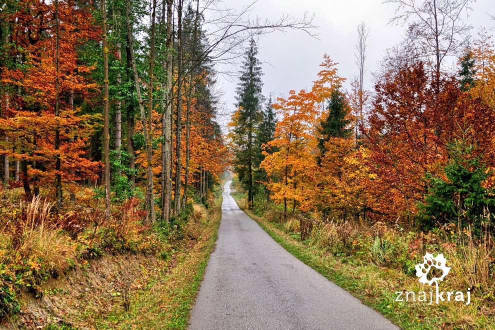Droga w Dolinie Krężelki