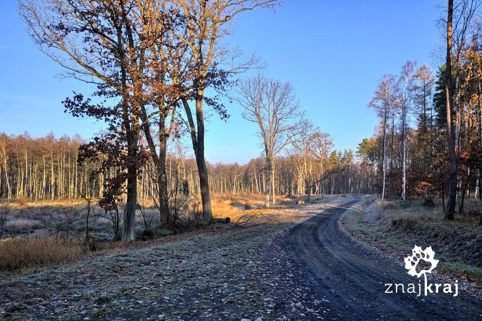 lesna-trasa-rowerowa-kolo-borzymia-pomor