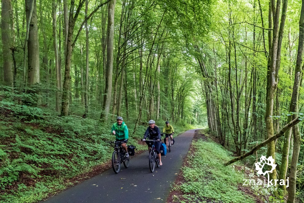 lesny-fragment-kolejowego-szlaku-rowerow