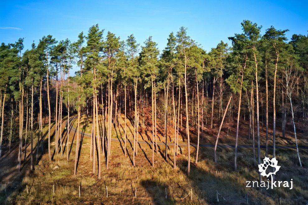 lesny-odcinek-blue-velo-pomorze-zachodni
