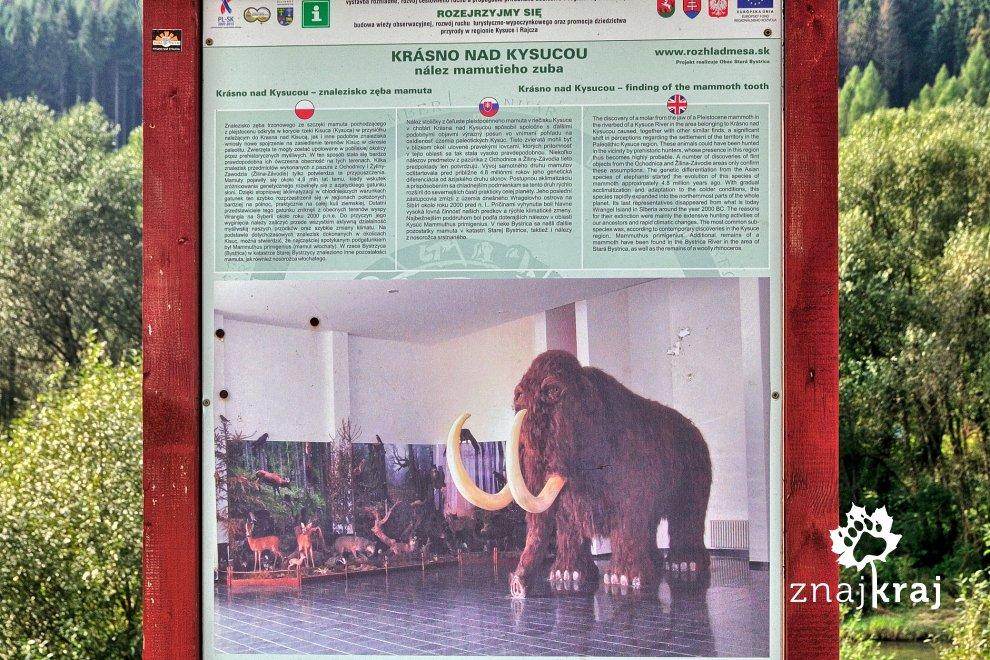Mamut w muzeum w Krasnem nad Kisucą