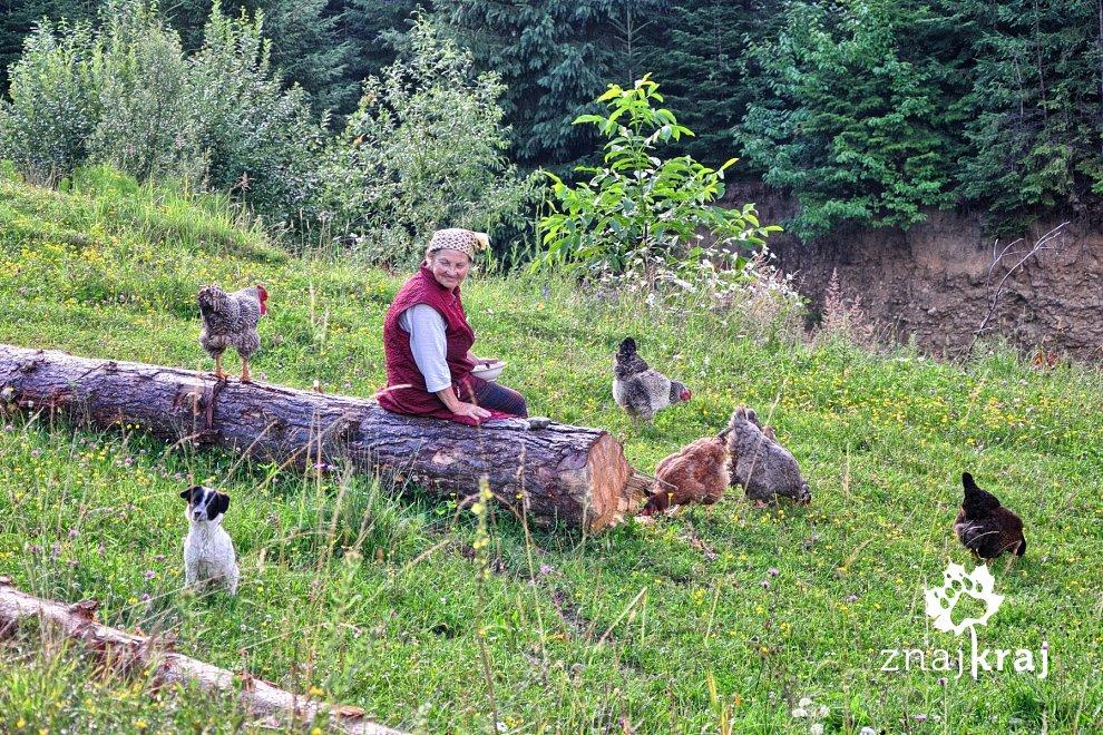 Pani karmiąca kury
