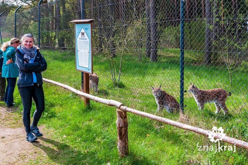 rysie-w-wildpark-schorfheide-brandenburg