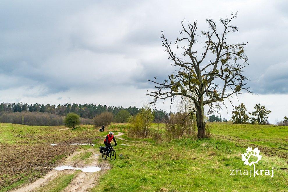 samotne-drzewo-na-mazurach-zachodnich-ma
