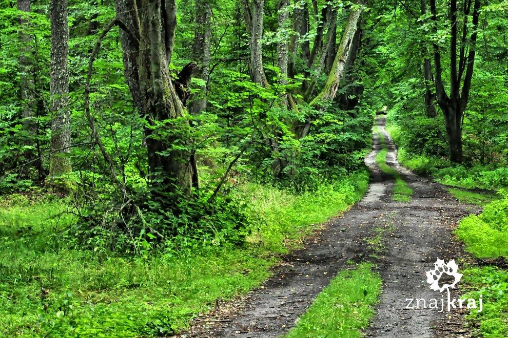 W lesie przed Okalicami