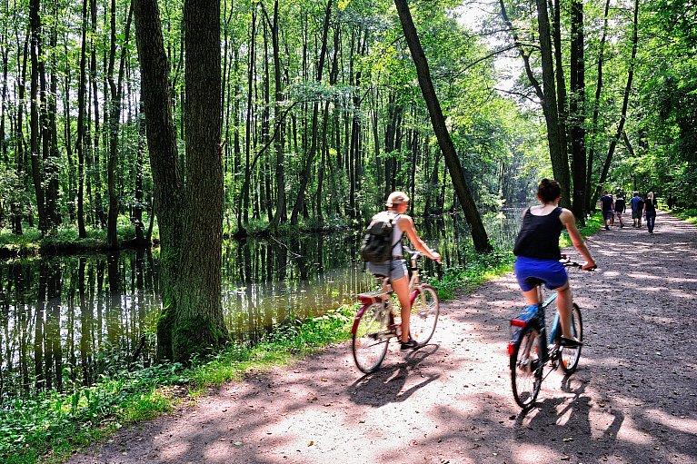 Rezerwat przyrody Niebieskie Źródła w Tomaszowie Mazowieckim