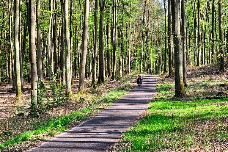 Zielona rowerowa Brandenburgia