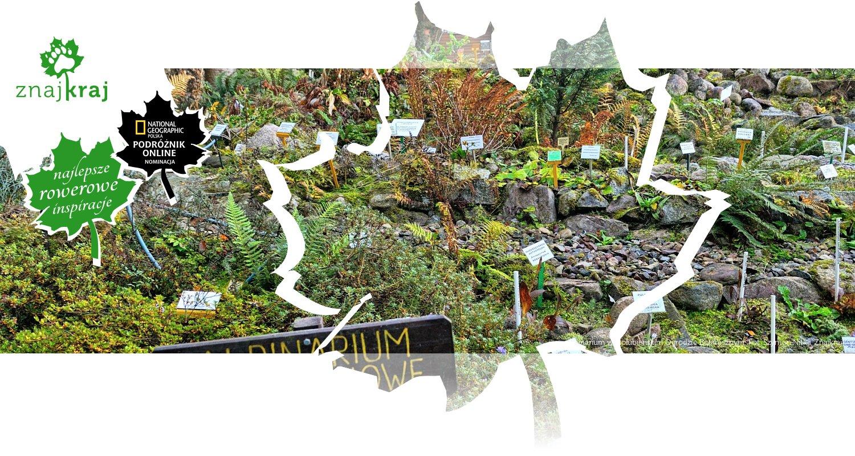 Alpinarium w Gołubieńskim Ogrodzie Botanicznym