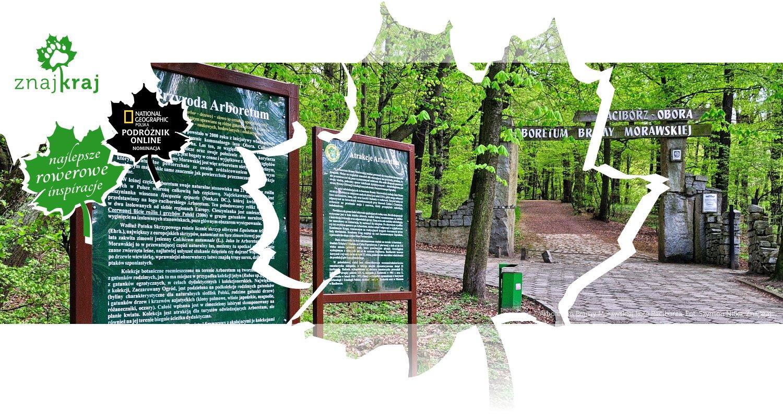 Arboretum Bramy Morawskiej koło Raciborza