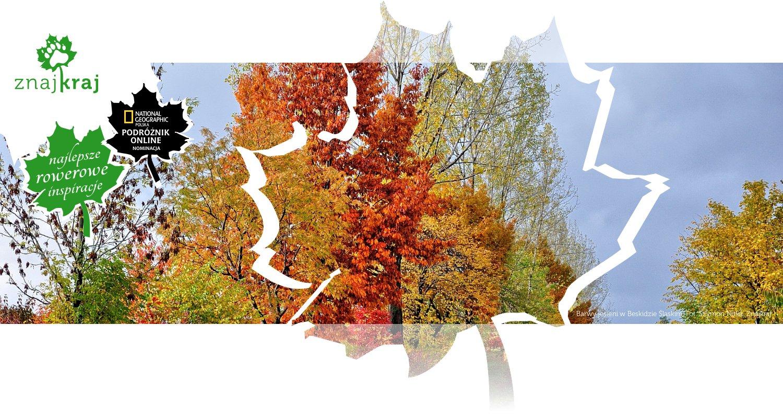 Barwy jesieni w Beskidzie Śląskim