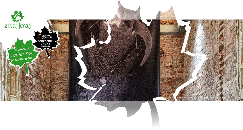 Biorama Projekt - wystawa zdjęć insektów